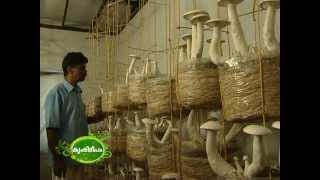 getlinkyoutube.com-Success story of mushroom cultivation