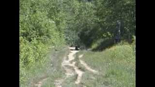 getlinkyoutube.com-Spotkanie z niedźwiedziem - w drodze na Smerek