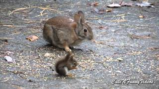 getlinkyoutube.com-Cute and Funny Squirrel Videos Compilation 2015  Part 7