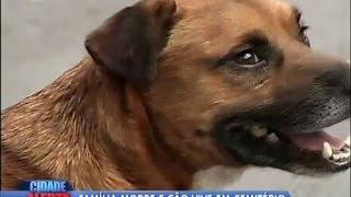 getlinkyoutube.com-Amigo fiel: cachorro vive em cemitério ao lado do túmulo dos donos