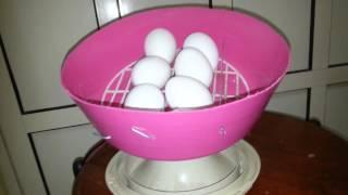 getlinkyoutube.com-فكرة جديدة لتقليب البيض في الفقاسة