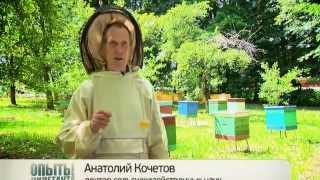 getlinkyoutube.com-Наука 2.0 - Пчеловодство (http://www.pro-life.me)