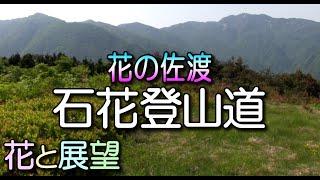 佐渡・花の石花(いしげ)登山道ガイド