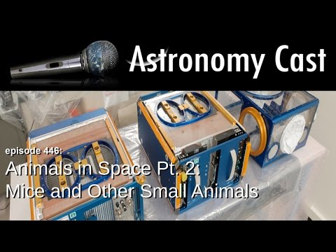 Astronomy Cast Ep. 446: Animals in Space Pt. 2: Mice and Other Small Animals