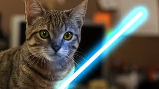 getlinkyoutube.com-Jedi Kitten - The Force Awakens