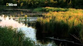 getlinkyoutube.com-Dunaj   evropská Amazonka E01