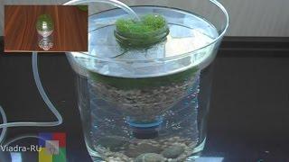getlinkyoutube.com-Самодельный аэрлифтный фильтр для аквариума # Испытание прототипа #