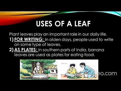 Class III SUBJECT: SCIENCE CHAPTER 3 (LEAF) PART 1