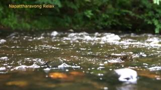 getlinkyoutube.com-ธรรมชาติ คลายเครียด เสียงน้ำไหล Nature sounds 6