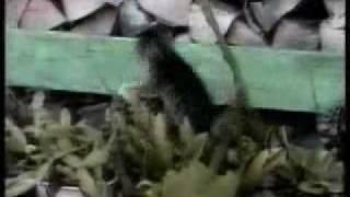 getlinkyoutube.com-Funny Cats