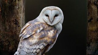 getlinkyoutube.com-Owl as a Totem: Your Personal Power Animal's Personality Characteristics and Life-Path Lessons