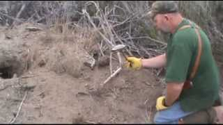 getlinkyoutube.com-Coyote Flat Set how to trap more coyotes with a shell