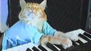Le Keyboard cat reprend du service