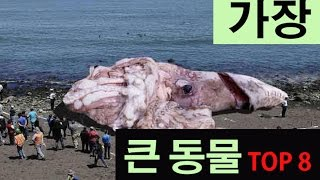 getlinkyoutube.com-(랭킹박스)세계에서 가장 큰동물 TOP8