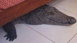 getlinkyoutube.com-10 Strangest Things Found Under Beds