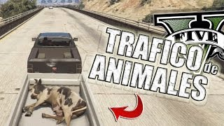 getlinkyoutube.com-GTA V | TRAFICANDO ANIMALES EN GTA 5 (Grand Theft Auto 5)