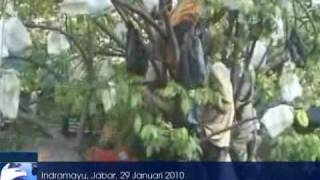 getlinkyoutube.com-Ular Gondrong Ditemukan Di Indramayu   news okezone com