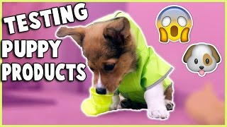 getlinkyoutube.com-TRYING PUPPY PRODUCTS WITH MY CORGI PUPPY