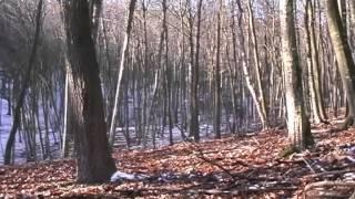 getlinkyoutube.com-Sus Scrofa   Wildboar Hunting