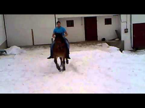 cai de rasa tureac 2