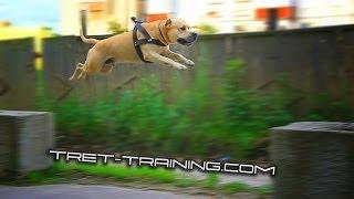getlinkyoutube.com-Super Dog Training