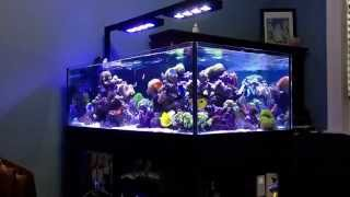 getlinkyoutube.com-deep blue professional  80 rimless  reef tank