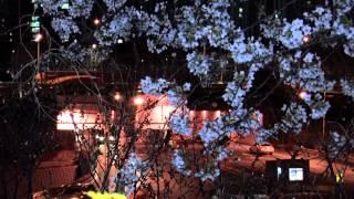 영시의이별 채빈 여의도 벗꽃 축제 야경