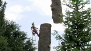 getlinkyoutube.com-Bonoldi Giardini e AliVerdi di F. Petronzi- abbattimento controllato di un cedro
