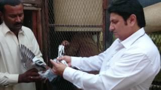 getlinkyoutube.com-Ustad Boota Farooq pakistani pigeons jeddah Makka Uae khadriala sarai alamgir
