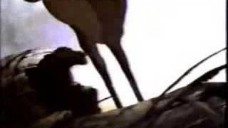 getlinkyoutube.com-Bambi - Trailer #1 (1988 re-release)