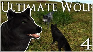 getlinkyoutube.com-Discovering Our Lost Mate!! • Ultimate Wolf Simulator - Episode #4