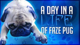 getlinkyoutube.com-A Day in the Life of FaZe Pug