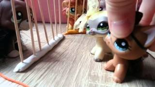 "getlinkyoutube.com-LPS : ""Zakreceni"" #22 Littlest Pet Shop !"