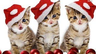 getlinkyoutube.com-Cat Christmas Wishes
