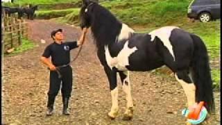 getlinkyoutube.com-Conozca un caballo único en el país