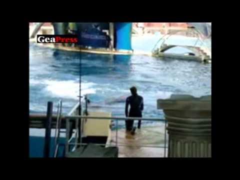 4 Accidente cu balene ucigase si delfini