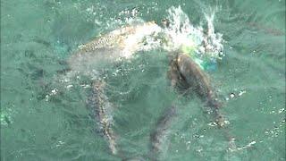 getlinkyoutube.com-魚影が凄まじい!これが自然海の水族館だ~釣りスギ四平in沖縄