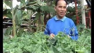 getlinkyoutube.com-อาชีพเกษตร - ปลูกผักตำลึงที่บ้านหนองฮี