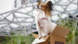 Meet some of the cutest dogs at Amazon width=
