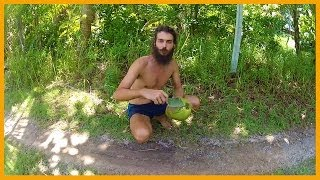 HOW TO OPEN A COCONUT AND DRINK THE WATER