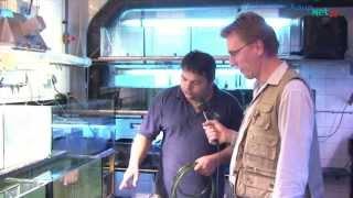 """getlinkyoutube.com-Das """"Aquarium Berlin"""" im Zoo der Hauptstadt"""