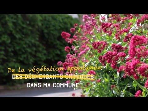 De la végétation spontanée dans ma commune !
