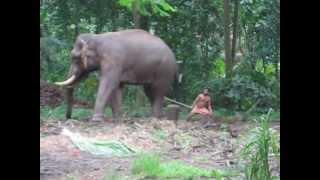 Elephant kicking @ Guruvayoor.AVI