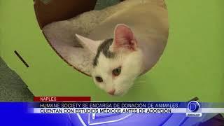 Visitamos Humane Society en Naples para hablar sobre la crueldad animal