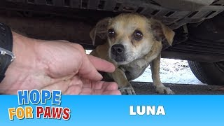 getlinkyoutube.com-How a little microchip changed this dog's life!!!  Please share this important video.