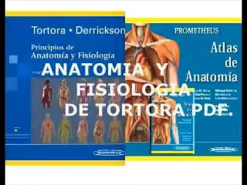 descargar tortora anatomia y fisiologia pdf