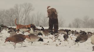 getlinkyoutube.com-The X: Hunting Massive Flocks of Mallards in the Snow