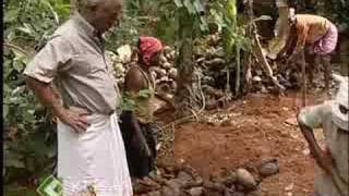 getlinkyoutube.com-Problems and prospects of coconut cultivation in Kerala