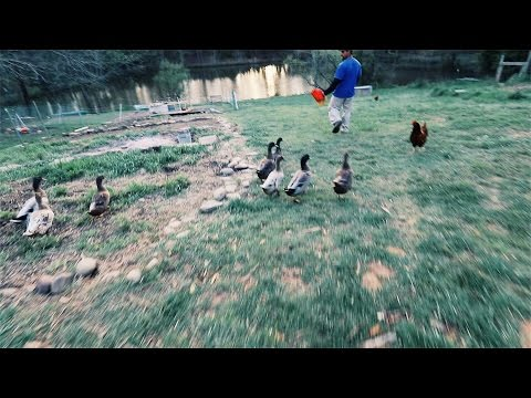Duck Man QUACKS, and They Follow