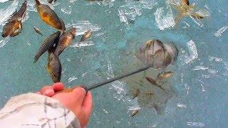 как ловить рыбу на озере калды